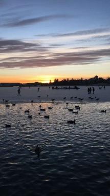Pond in Reykjavik with ducks