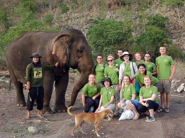 isv thailand elephant